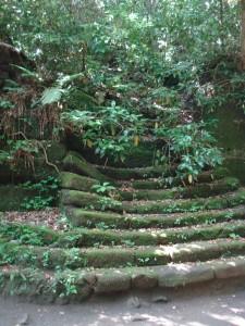 Un ancien escalier perdu dans la végétation