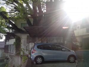 Moui, il y a donc un arbre au beau milieu de la maison où le soleil me tape trop sur la tête ?
