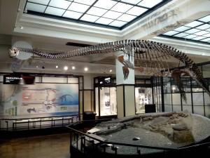 Futabasaurus suzukii
